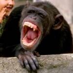 смеющаяся обезьяна
