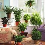 Какие растения можно вырастить в домашней обстановке в холодное время года?
