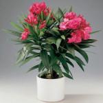 Красивые, но ядовитые растения