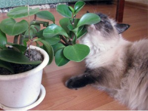 ядовитые растения в доме