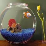 Выбираем аквариум по фен-шуй
