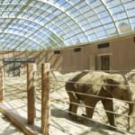 Дом слонов в Копенгагенском зоопарке