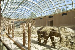 слон фото